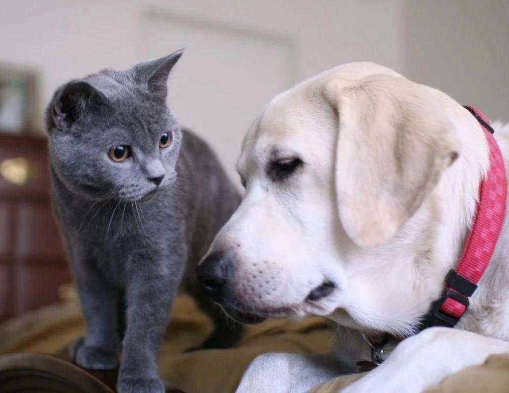 """""""Вы не ждали, а я пришёл - и это не смотря на то, что ваш пёс гонял меня"""", - промяукал кот"""