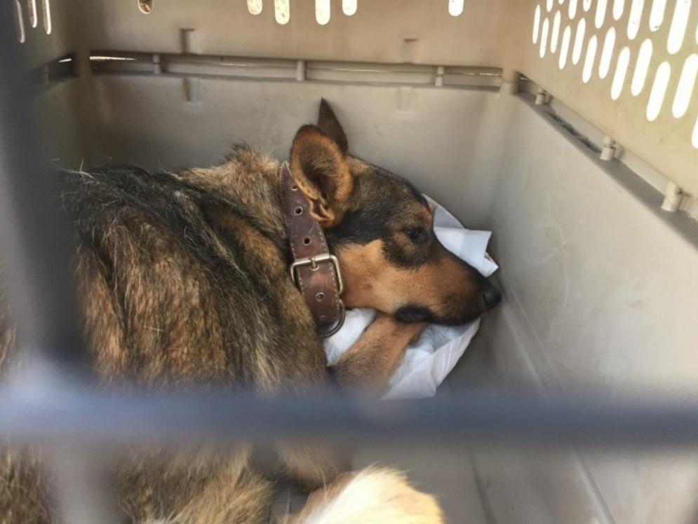 Спасение трёх истощенных собак - которых кто-то бросил в заброшенный колодец