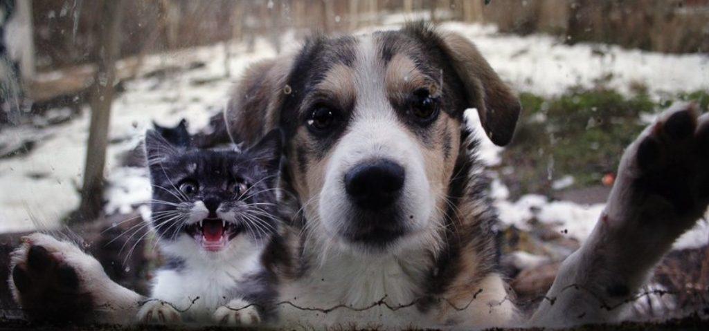 Заметив маленького котенка под дождем - собака решила помочь малышу и привела его в дом хозяев