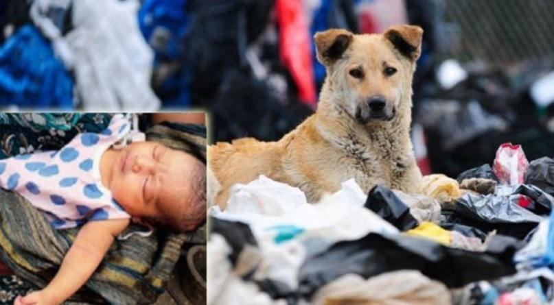 Бродячие псы спасли новорожденного ребенка - брошенного на мусорной свалке