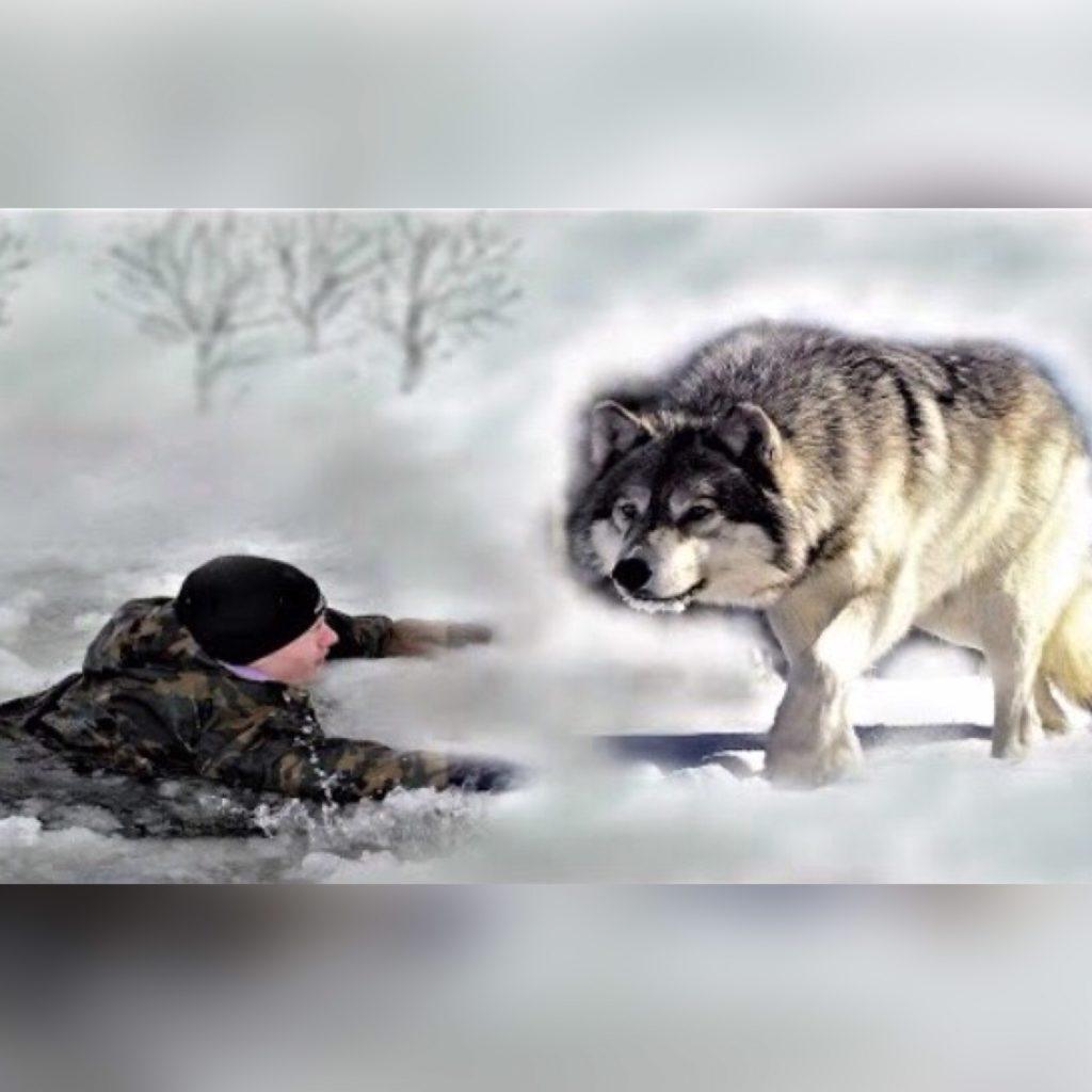 Охота на волка закончилась полной неожиданностью!