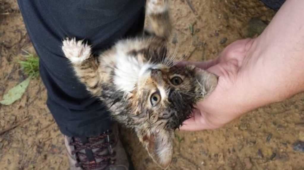 На остановке мокрый котенок сам выбрал себе хозяина