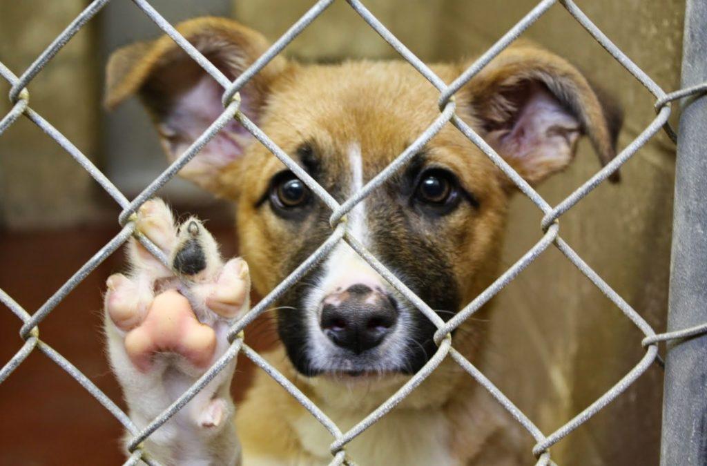 Собаки ждали, когда придут их покормить, но клетки были заперты, а хозяин отдыхал на море