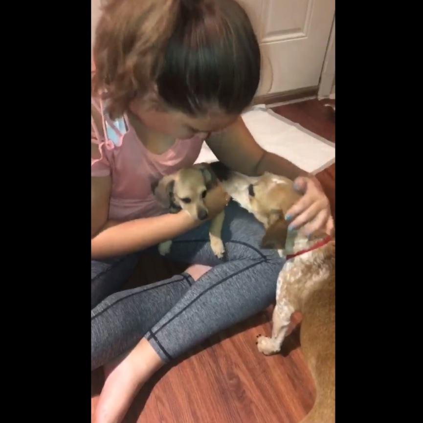 Мама-собака в приюте закрывала собой щенка - а сама дрожала от страха