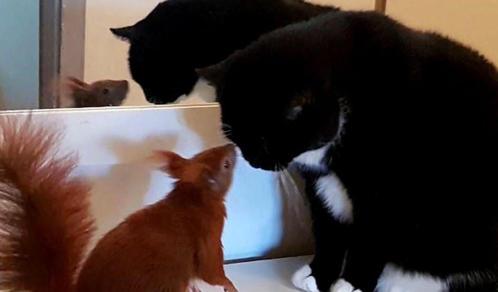 Кошка  приняла маленького брошенного бельчонка