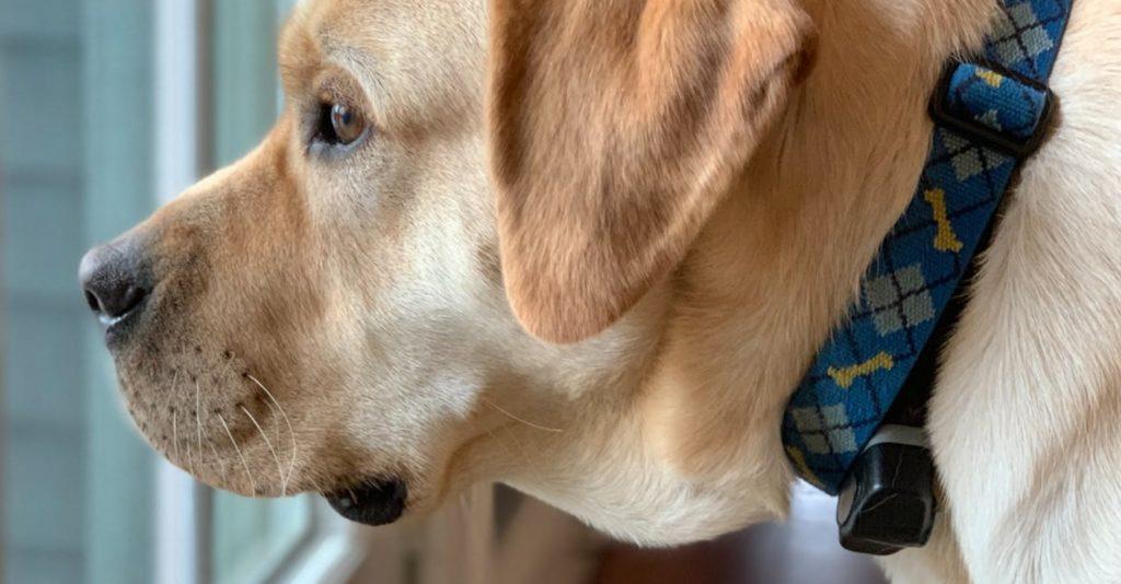 Женщина считает, что ее собака, которая спасла ей жизнь - послана свыше