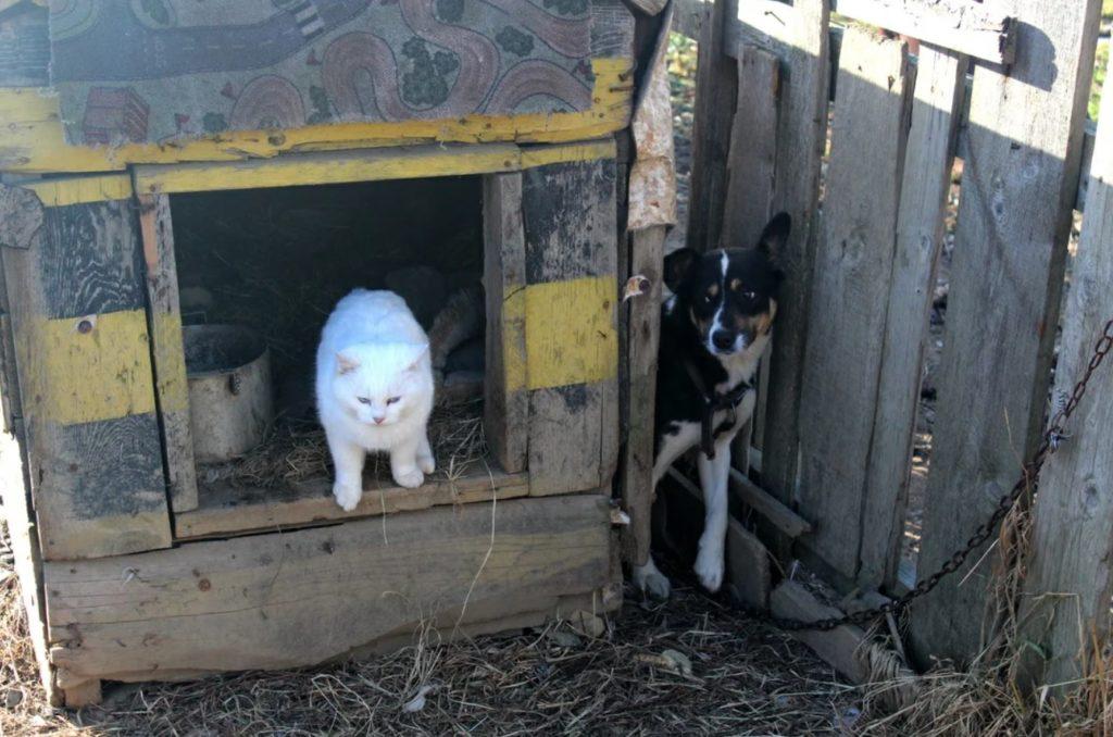Собака Муха, испугавшись кота Фелиппе, спряталась за будку