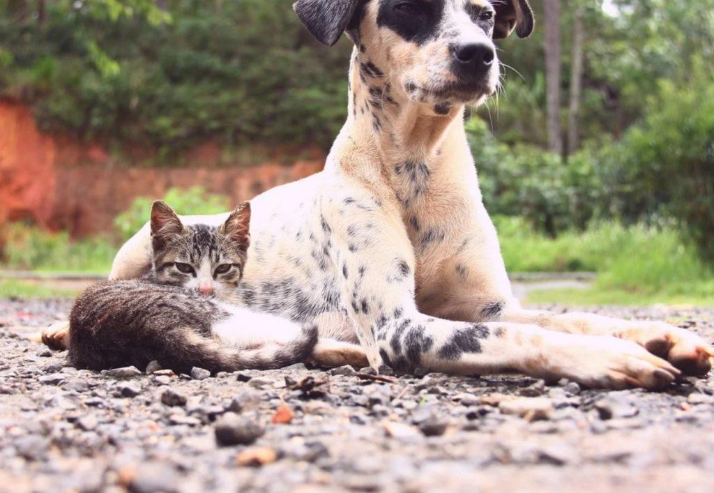 Джейсон привлёк внимание прохожих: было странно, что такая огромная породистая собака гуляет одна