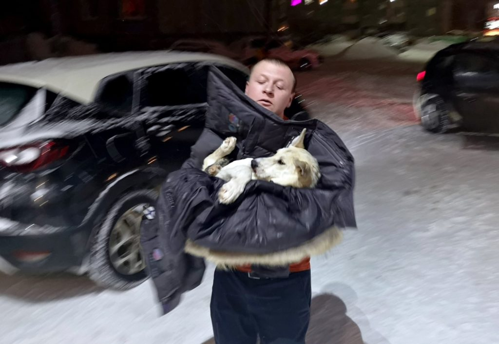 Собака, попавшая под колеса машины, умоляла ей помочь