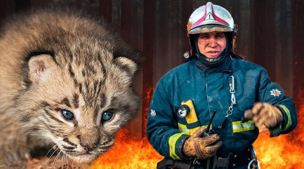 Спасенный во время пожара рысенок отблагодарил своего спасителя