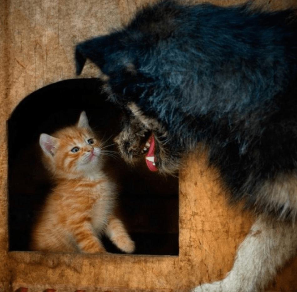 Котик побежал к собачьей конуре - так как до мамы он добраться бы не успел