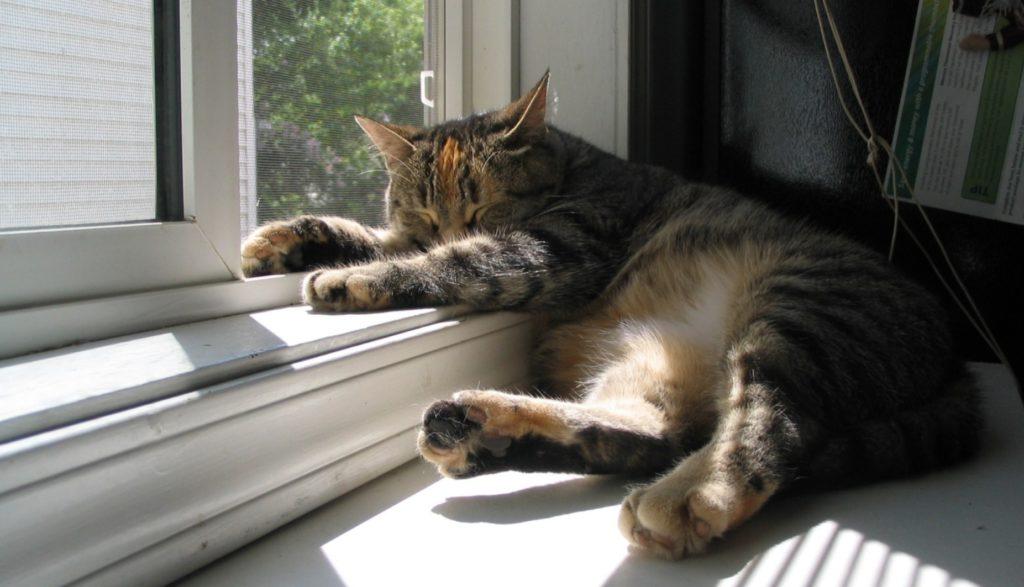 Пострадавший от человеческой жестокости кот - выжил и вернулся в семью