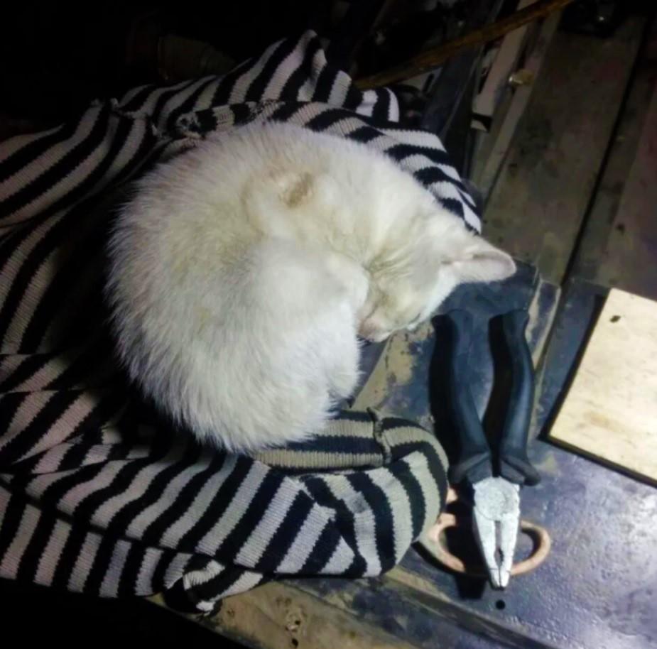 Кошка, которую приютили в автомастерской, спасла жизни троих сотрудников