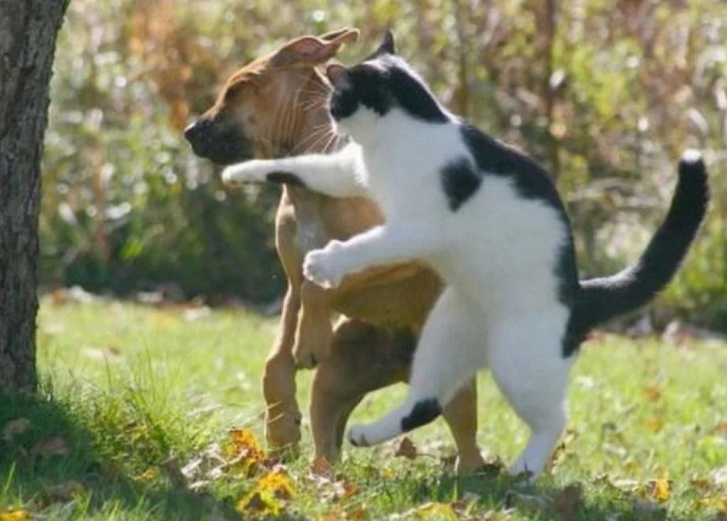 Кот терпеть не мог настырных: а когда пришлый пёс стал докучать соседской собаке - он не мог просто так на это смотреть