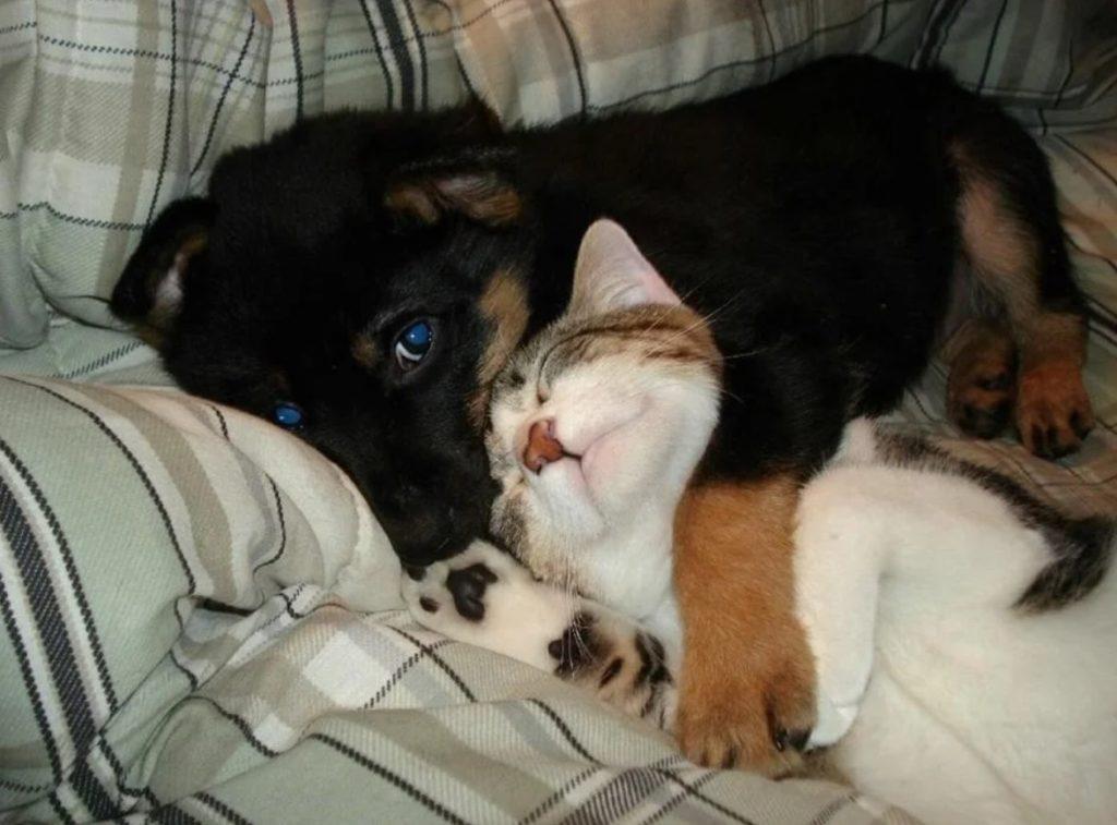 Совсем комнатный щенок Блики потерянно лежал - у него едва хватило сил, чтобы подойти к калитке дома, где жил кот