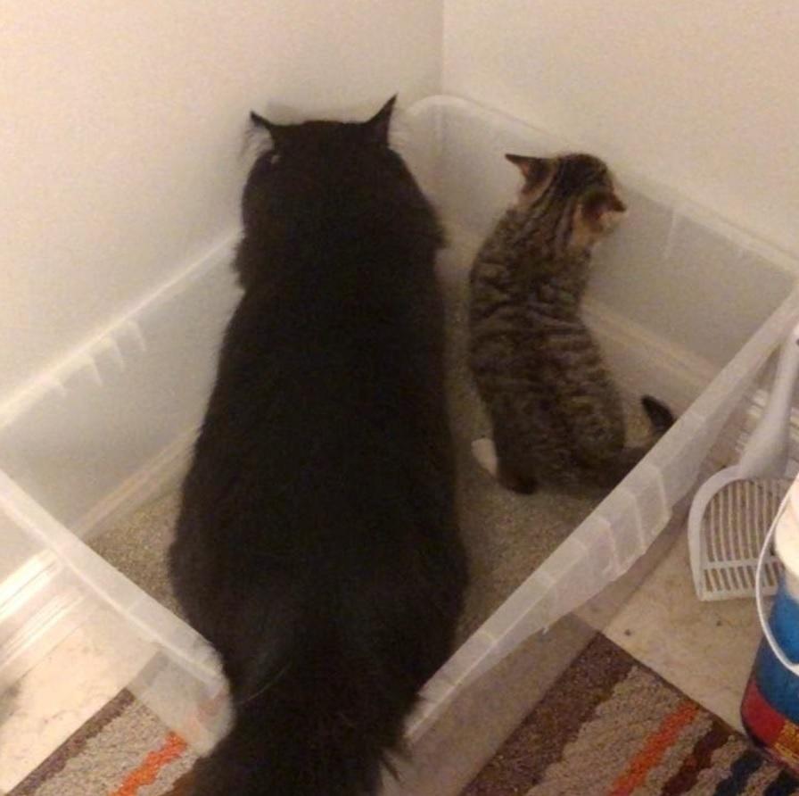 Промокшую от дождя двухмесячную кошечку, нашли на парковке и кот стал ей настоящим родителем