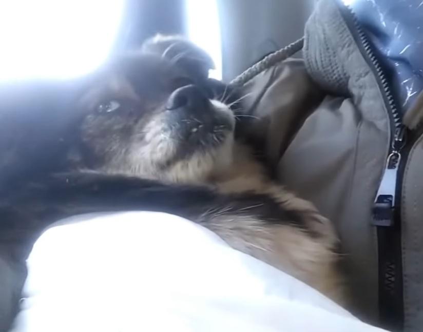 Слепая на один глазик собачка Сонечка, которую выгнали хозяева, смотрела на свой дом в надежде, что ее заберут обратно