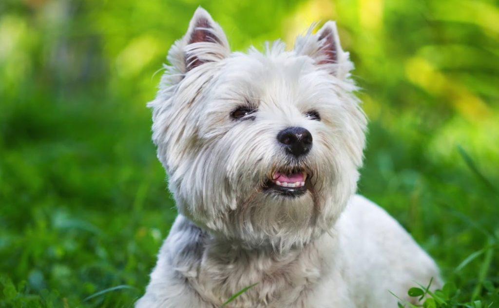 Бездомный щенок редкой породы  прятался от дождя на детской площадке, пока его не заметила женщина