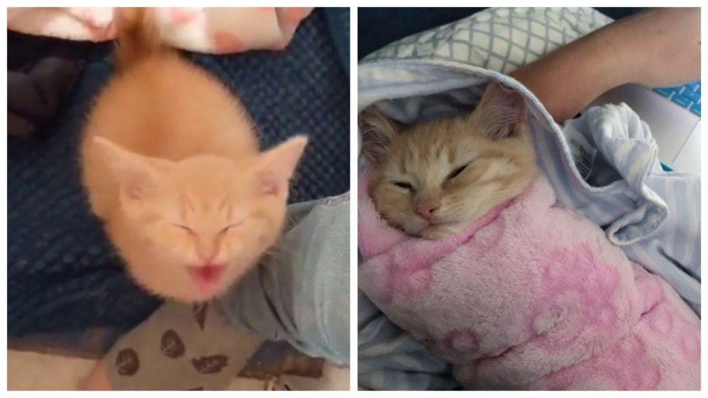 Маленький уличный котик хочет - чтобы его всё время обнимали и гладили