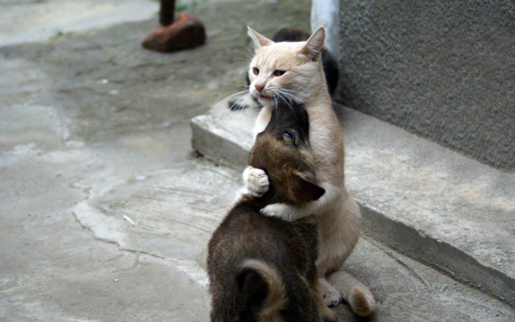 Кошка повела обречённого щенка за собой на оживлённую тропинку, ведущую к метро