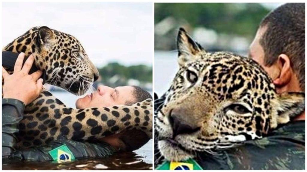 Ягуар, которого военнослужащие во время наводнения достали из воды, стал их обнимать, как будто он не хищник, а маленький домашний котик