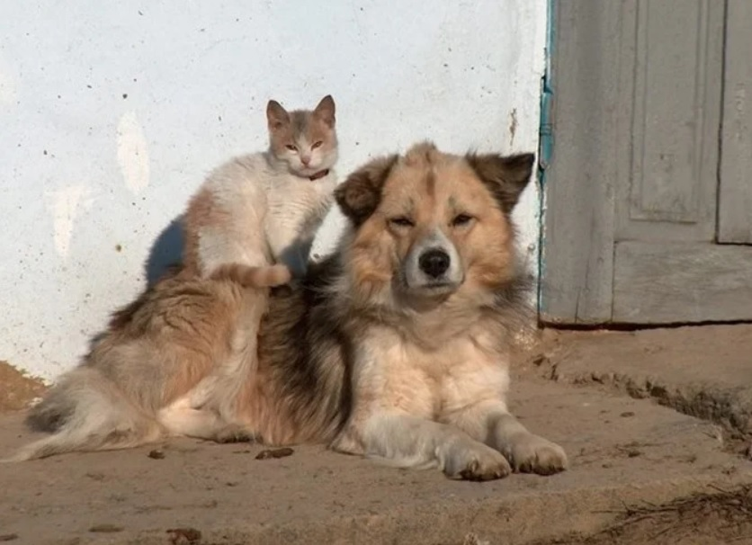Блонди не могла предать бывшего друга-пса, поэтому собака предпочла дружить с кошкой