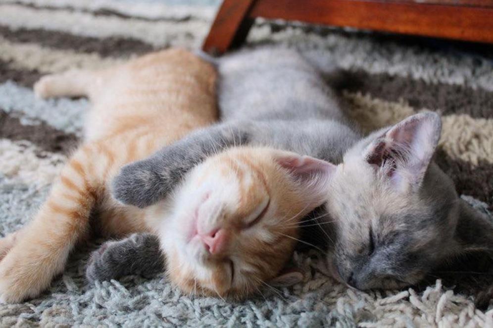 Кошечка согревала лапками от холода своего слепого братика, но удача улыбнулась им и помощь пришла вовремя