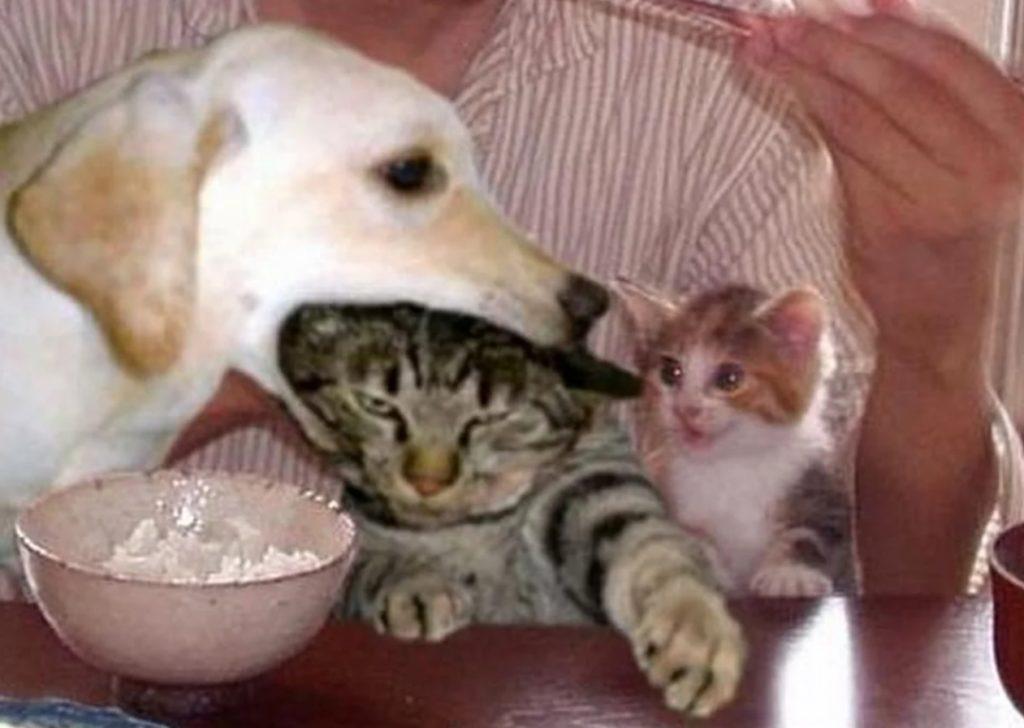Собаке как старшей сестре удалось проучить кота - который обижал беззащитную кошечку Пуговку