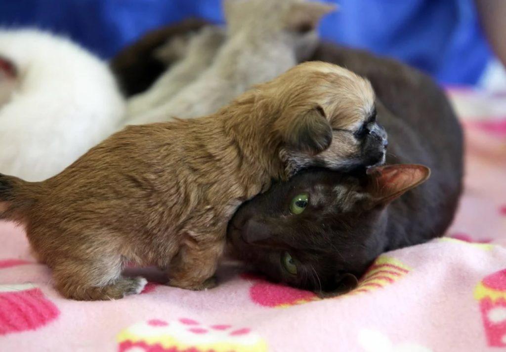Щенок даже не заметил подмены и вместе с остальными котятами стал кормиться от кошки