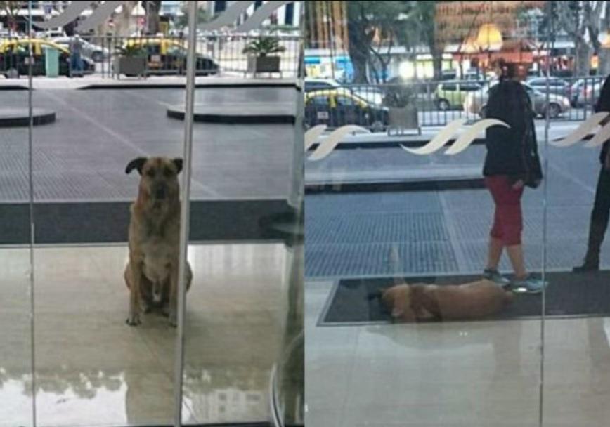 Пес, который жил на улице, обрел любимую хозяйку и начал новую и счастливую жизнь