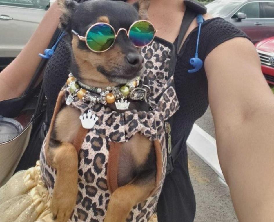 Собака из приюта стала звездой журналов