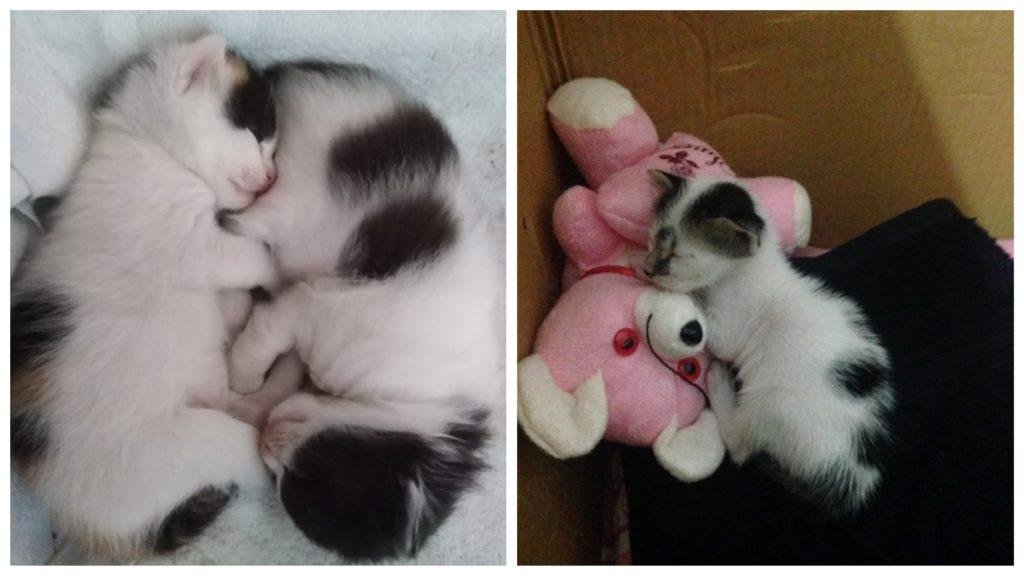 Новорожденные котята остались живы, благодаря женщине, которая забрала их из приюта