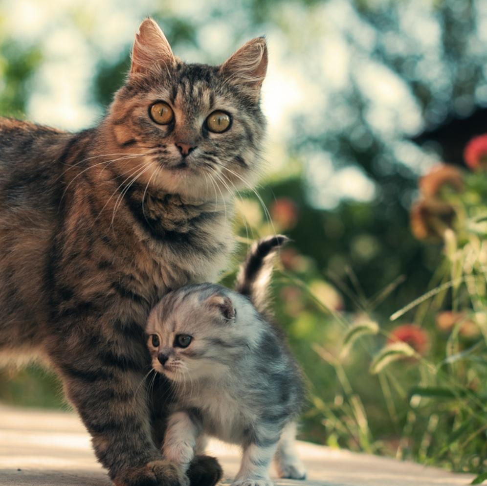 Кошку, которая в скором времени должна стать мамой, вывезли в лес