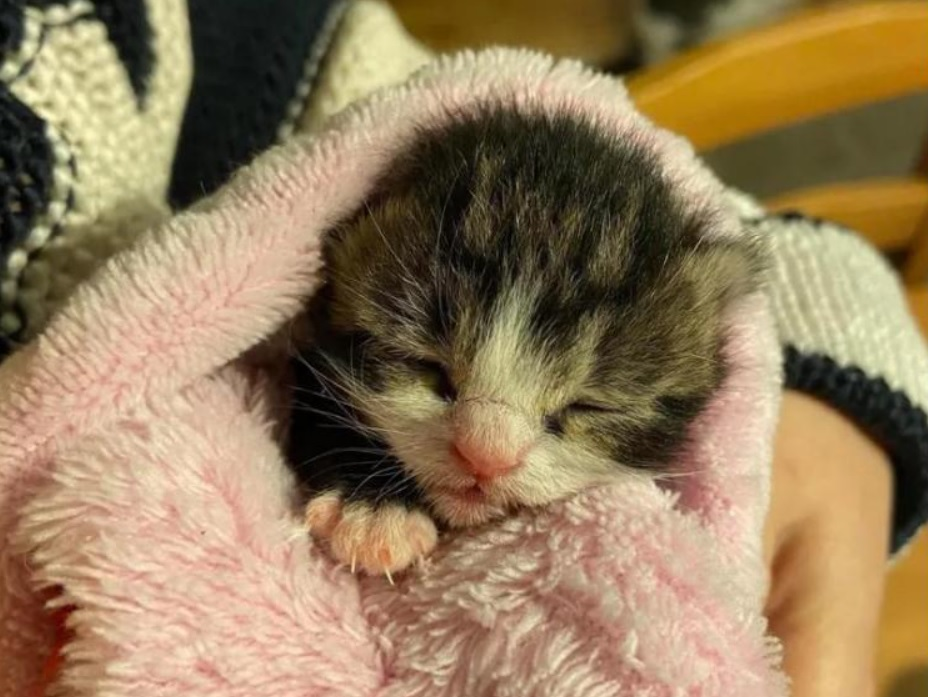 Грустная история спасения молодой кошечки Маркизы и её котенка Тишки