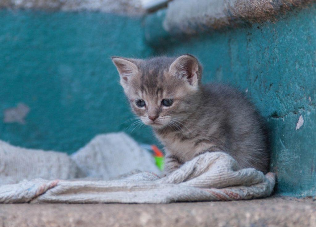 """""""Прости, малыш, но у меня дома семеро таких сидят!"""" - оправдывалась я перед бездомным котенком. Но судьба была на его стороне"""