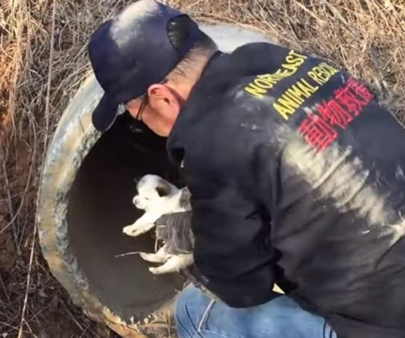 Волонтеры спасли щенят: которых мама-собачка прятала в сливной трубе