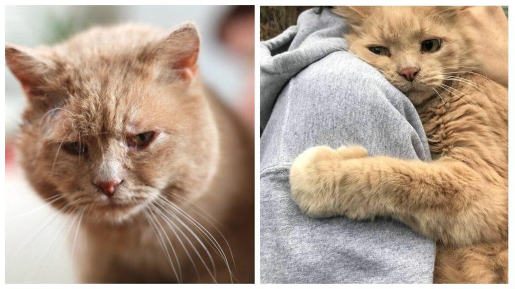 Женщина хотела избавиться от старого кота - но совесть не позволила ей это сделать