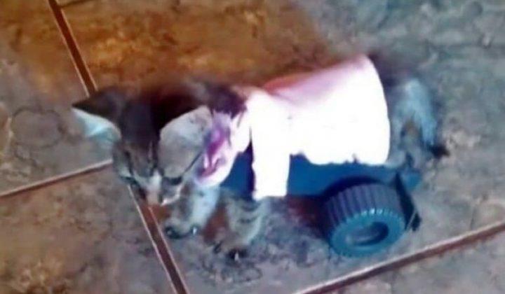 Девятилетний мальчик помог котенку - который не мог самостоятельно передвигаться