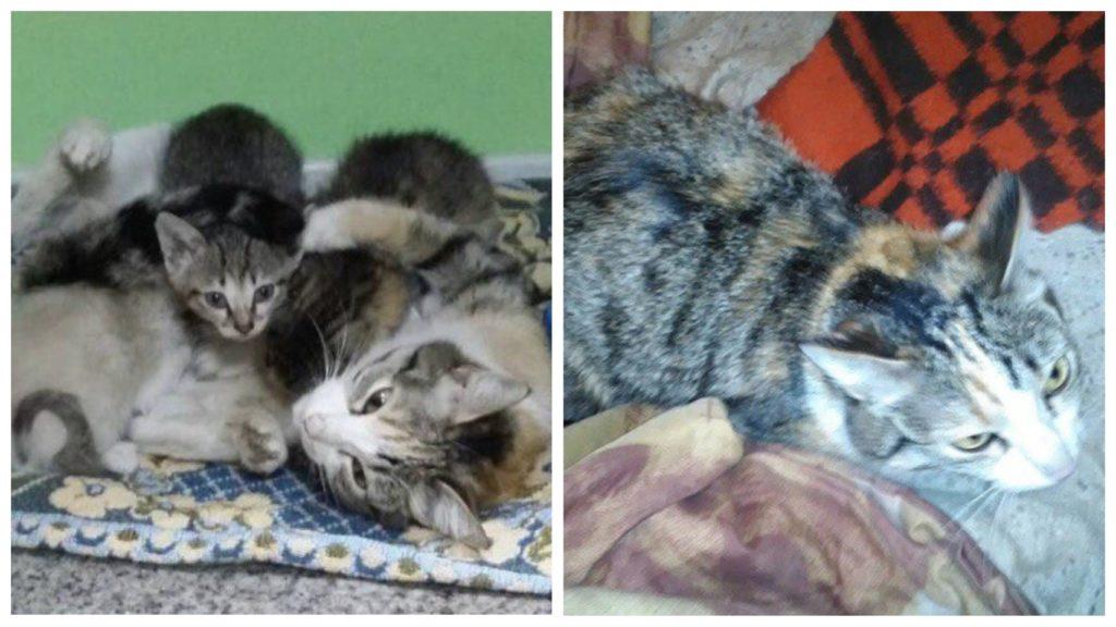 С перебитым позвоночником кошка-мама не дала погибнуть не единому своему котенку