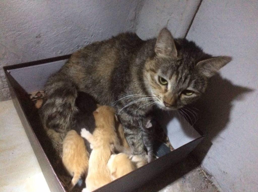 Беременная бездомная тощая кошка - звала людей на помощь в подвале