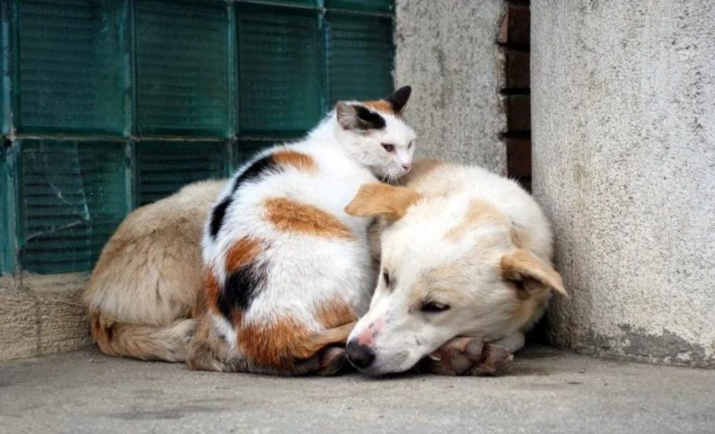 Фрося, кошка с пятнышками и сильным характером, охраняла бездомную собаку, которая никак не могла поладить с другими псами