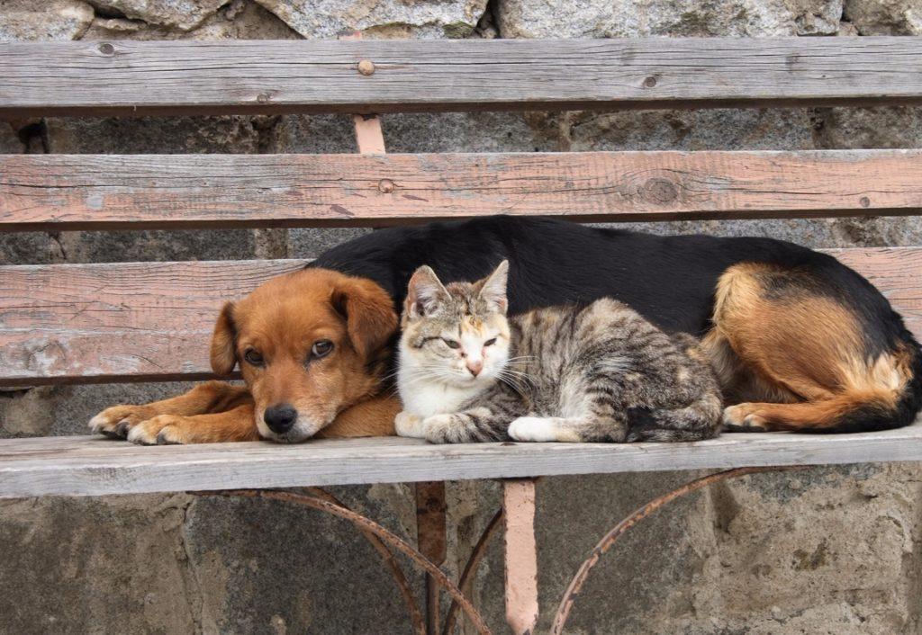 Пёс увидел кота, одиноко сидящего на лавочке, и он почувствовал в нём родную душу, так как тоже был одинок