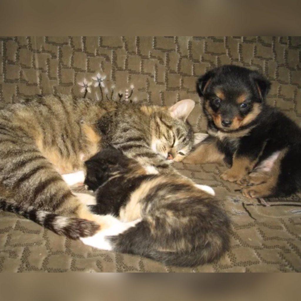 Щенок не хотел, чтобы кормилица-кошка бросала его, ведь он и подумать не мог, что у неё не один