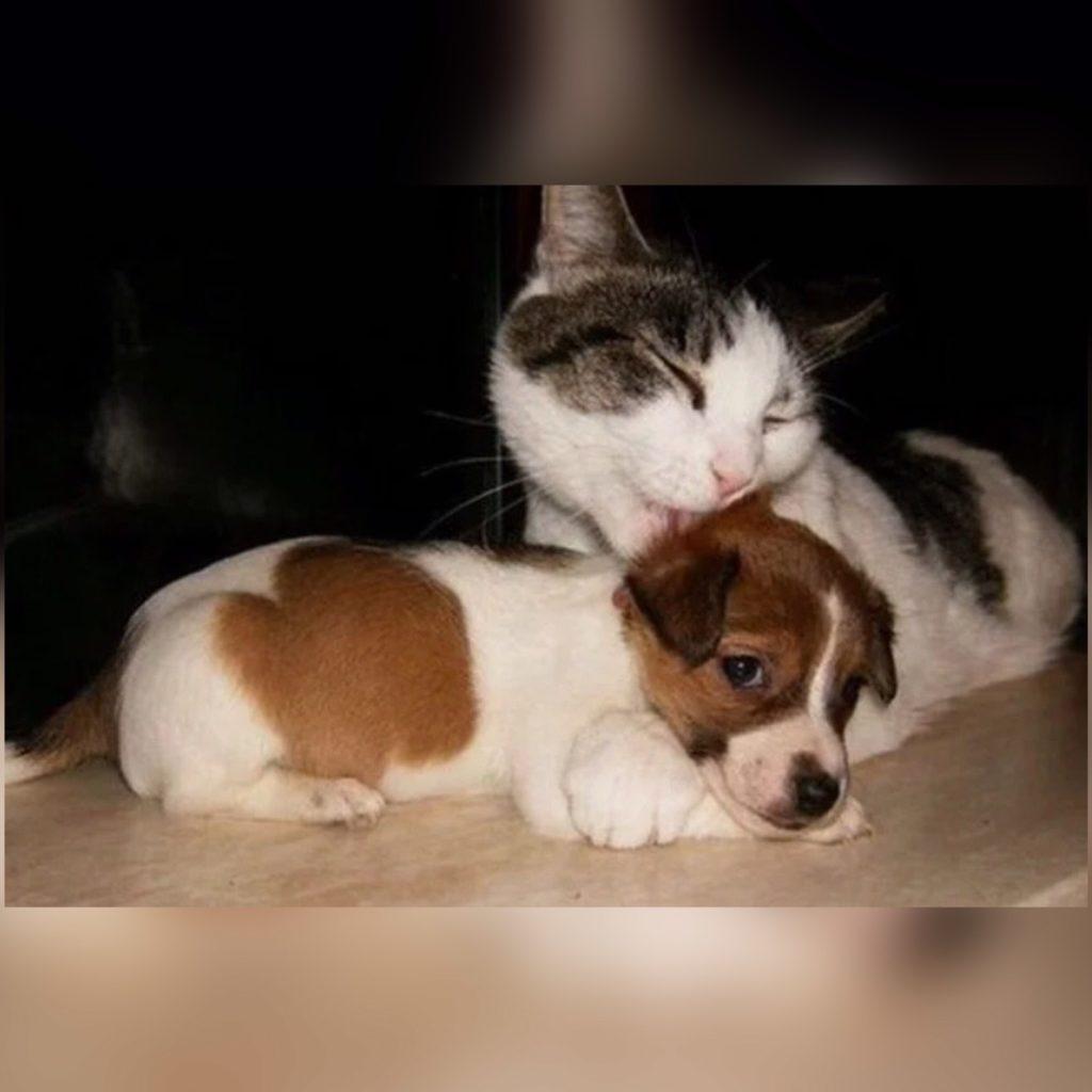Люсику было сложно в новом доме - обстановка для щенка была чужой и лишь кошка заменяла ему тепло матери