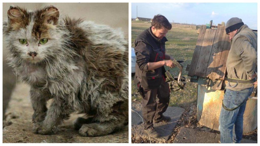 Маленький котенок провёл в подземном плену две недели
