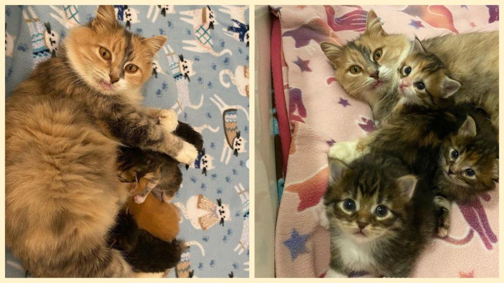 Теперь кошечке и её котятам больше никогда  не придется ни одного дня жить на улице