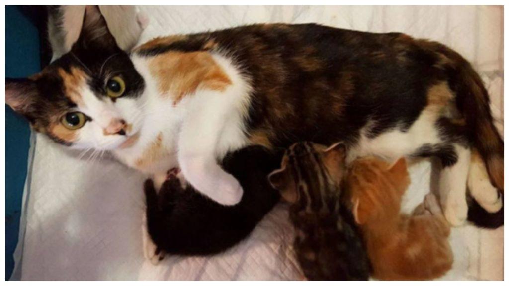 От встречи с человеком кошка стала парализованной, но как только пришла в себя, ринулась искать своих котят