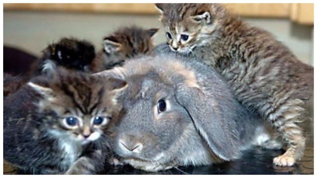 Крольчиха выкормила котят - как своих родных деток