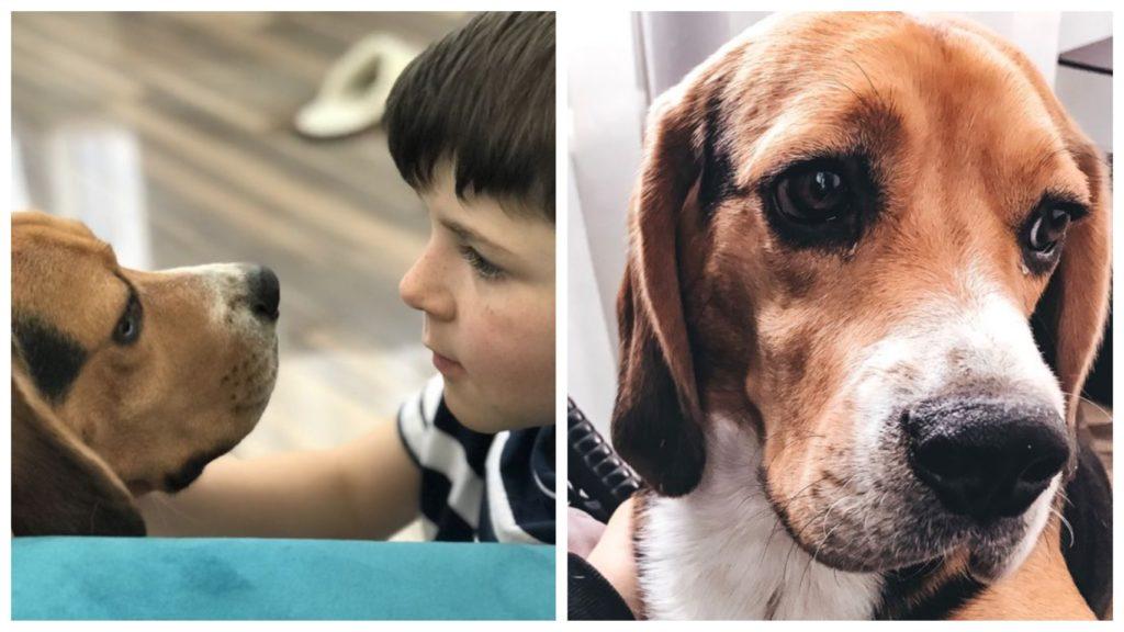 Бигль, которого забрали из приюта для животных, объединил семью и внес в их жизнь активность и радость