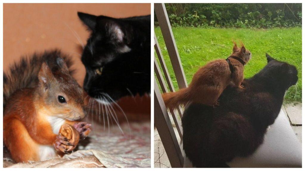 Мужчина подарил второй шанс на жизнь бельчонку, дом и друга кота